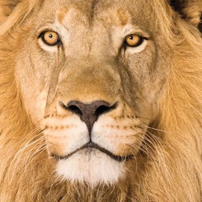 Lion's mind logo