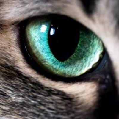 Cat's eyes logo