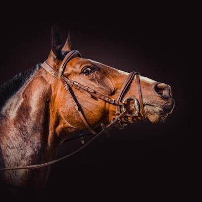 Dark Horse Racing logo