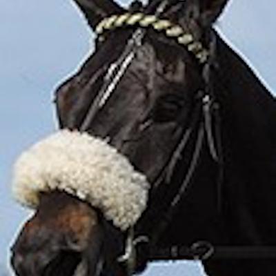 Horseforacourse logo